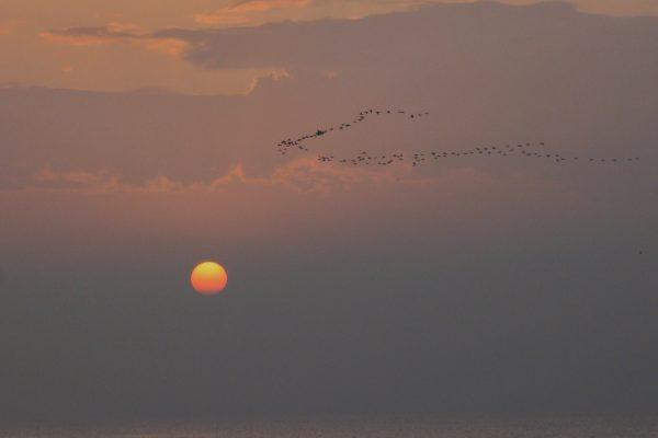 L'escriptura dels ocells