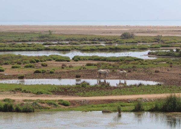 l'Aufacada, vora l'illa de Buda